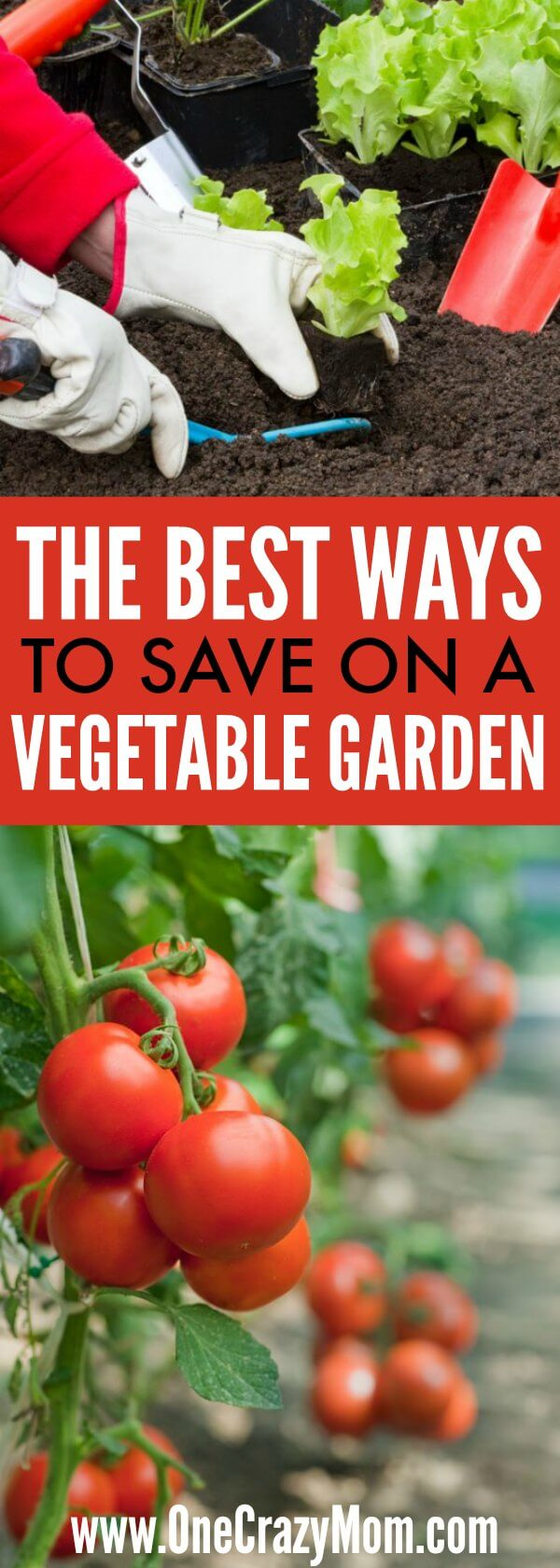 Gardening doesn't have to be expensive once you know how to save money in the garden. Find out the best ways to save money in the vegetable garden. 5 Vegetable Garden Money Saving tips. Learn the best ways to save money in the vegetable garden!