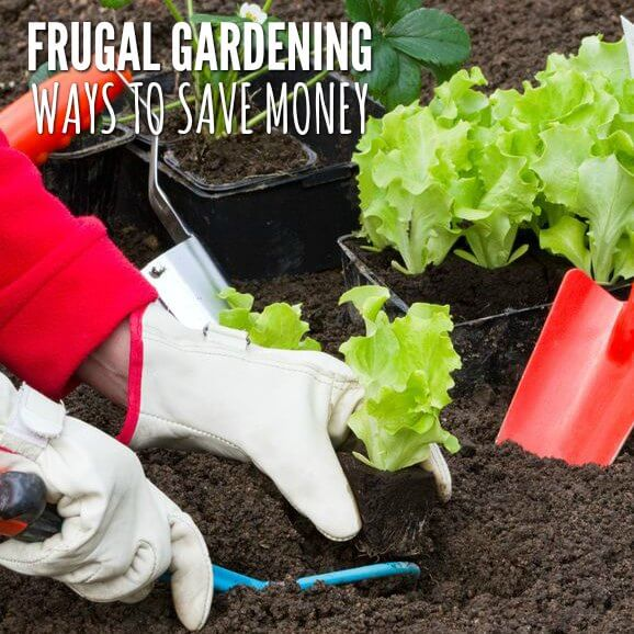 Frugal Gardening: 5 Ways to Save Money in the Garden