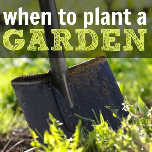 When to Plant a Garden – 3 things you need to know