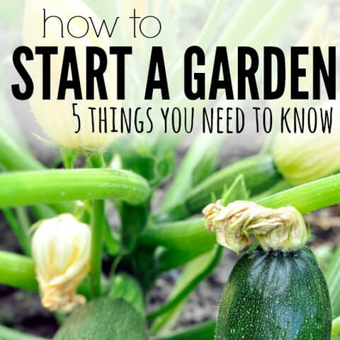 How to Start a Garden (5 things you need to know)