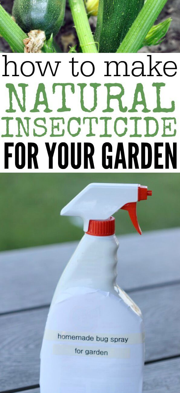 Learn how to make all Natural Pesticide for your Garden. Homemade Insecticide is easy to make and much better than store bought chemicals. Anyone can make this homemade insecticide for plants. Try this all natural insecticide. You will love this homemade insecticide for garden vegetables.