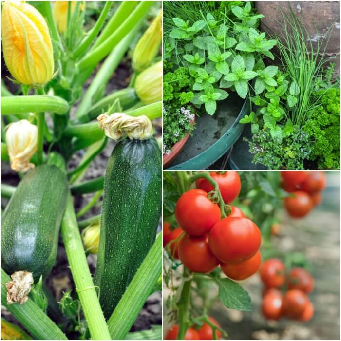 Home Gardening for Beginners. What to grow in a garden for beginners. Gardening for Beginners. Learn all about vegetable gardening for beginners.