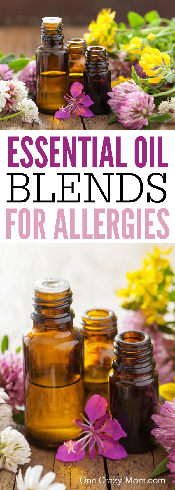 Here are 6 of the best essential oils for allergies. Try one of these essential oils for allergies. These are the best essential oil blends for allergies.