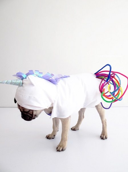Check out these homemade dog costumes that are so cute! 15 homemade dog costumes that are quick and easy. Your dog will be the hit of the Halloween party!