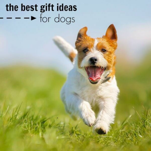 Dog Gift Ideas – the Best Dog Gifts