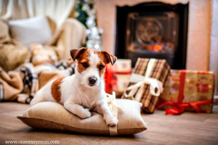 Find the best gift ideas for dog lovers here! 25 gift ideas for dog owners they will love. The best presents for dog lovers.